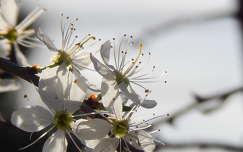 Tavasz, virág