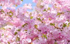 Itt a tavasz! :)