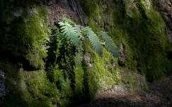 páfrány, árnyék, erdő