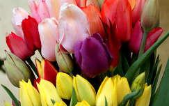 tulipán anyák napja tavaszi virág tavasz virágcsokor és dekoráció