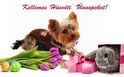 húsvét nyúl kutya tulipán