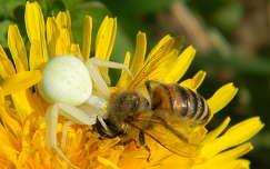 rovar pók méh