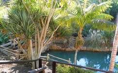 spanyolország tenerife kertek és parkok pálma kerítés kanári-szigetek