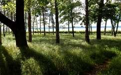 balaton magyarország fa árnyék tó