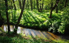 árnyék patak tavasz fény erdő