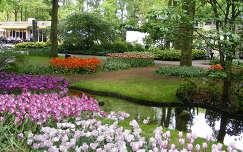Keukenhof - Hollandia