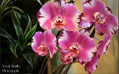 Orchidea  Fotó:Novák Titanilla