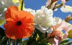 pünkösdi rózsa tavaszi virág virágcsokor és dekoráció írisz