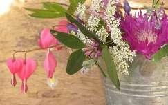 tavaszi virág szívvirág tavasz