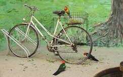 Ausztrál papagájok