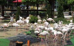 Flamingók a Budapesti Állatkertben