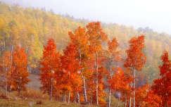 havazás fa ősz erdő
