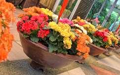 begónia virágcsokor és dekoráció