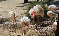 Flamingófészkek a budapesti Holnemvolt parkban
