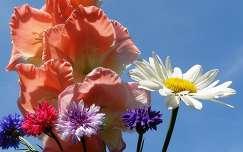 margaréta kardvirág nyári virág búzavirág nyár virágcsokor és dekoráció