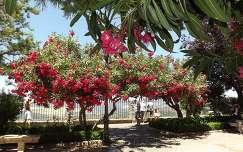 spanyolország ronda kertek és parkok leander kerítés nyár