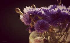 búzavirág vadvirág nyári virág virágcsokor és dekoráció