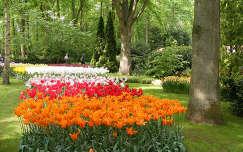 Hollandia - Keukenhof