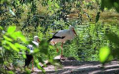 madár gólya