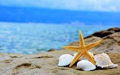 Rab-sziget, tenger, kagyló, csillag