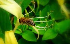:) méhecske