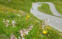Virágmező a Glossglockner hágó panorámaútja mentén