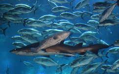 A Dubai Akvárium halai