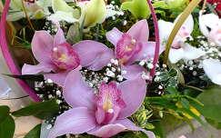 Orchidea. Fotó: Csonki.