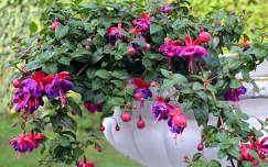 fukszia virágcsokor és dekoráció