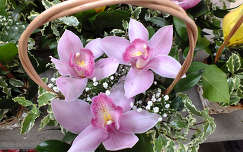 Orchidea. Fot�: Csonki