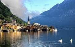 hattyú hallstatt alpok tó ausztria