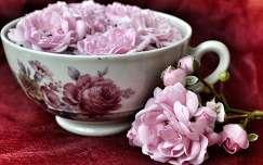 csendélet rózsa