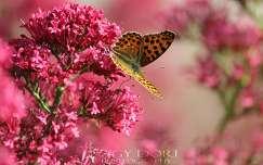 Pillang�, Tavasz