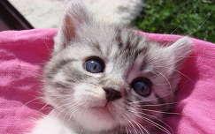 Buborék cica