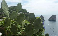 Kaktuszok és szép panoráma Capri szigetén