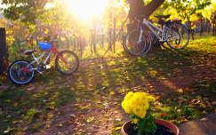 szőlőültetvény krizantém ősz fény