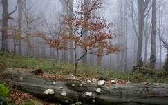 Kékestető környéki erdő