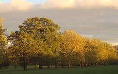 Anglia,park,osz,sarga