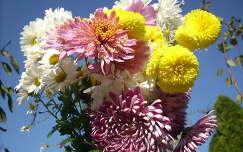 krizantém margaréta virágcsokor és dekoráció