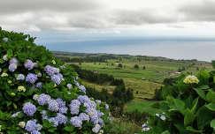 Jánosi Sándor: Azori-Szigetek, Látkép hortenziával