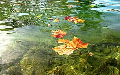 Balatoni ősz