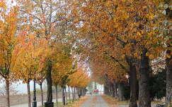 Budapest,Tóth Árpád sétány őszi ködben