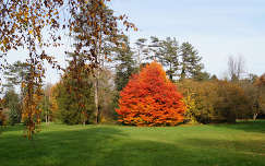 Szarvasi Arborétum - 2014. ősz