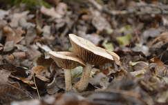 Gombák az avarban