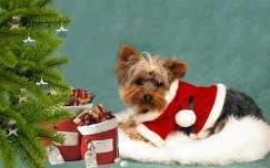 mikulás karácsony kutya