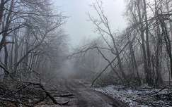 Dobogókő - fák a pusztító ónos eső után