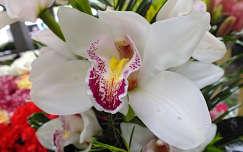 Orchidea. Fotó: Csonki