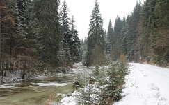Szalárd-patak völgye, Görgényi-havasok, Erdély