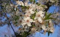 Tavaszi álom