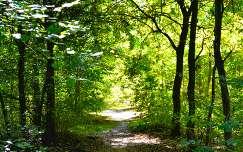 Kecskemét - Arborétum